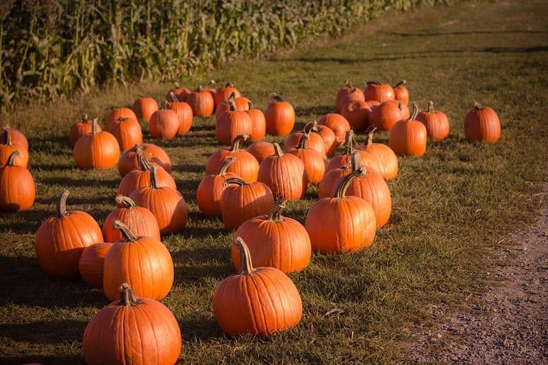 em_fall_pumpkins