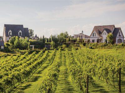 EM_menomonie_Cottage_Wine_Vineyard